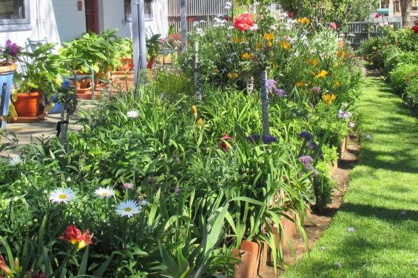 anna-s-garden-clarence-gardensDD7223CF-E710-D3FA-980D-8939A0E2DEAD.jpg