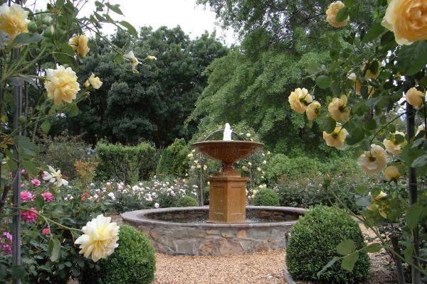 ashgrove-iris-garden-gumeracha32B19455-BBF4-3658-00ED-C254927DE9A6.jpg
