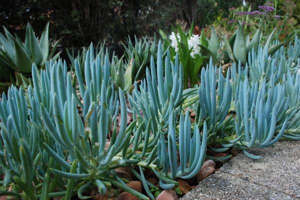 bellevue-succulent-garden-belleview-heights4E9B9970-EFDA-514C-8D73-F70FD492D145.jpg