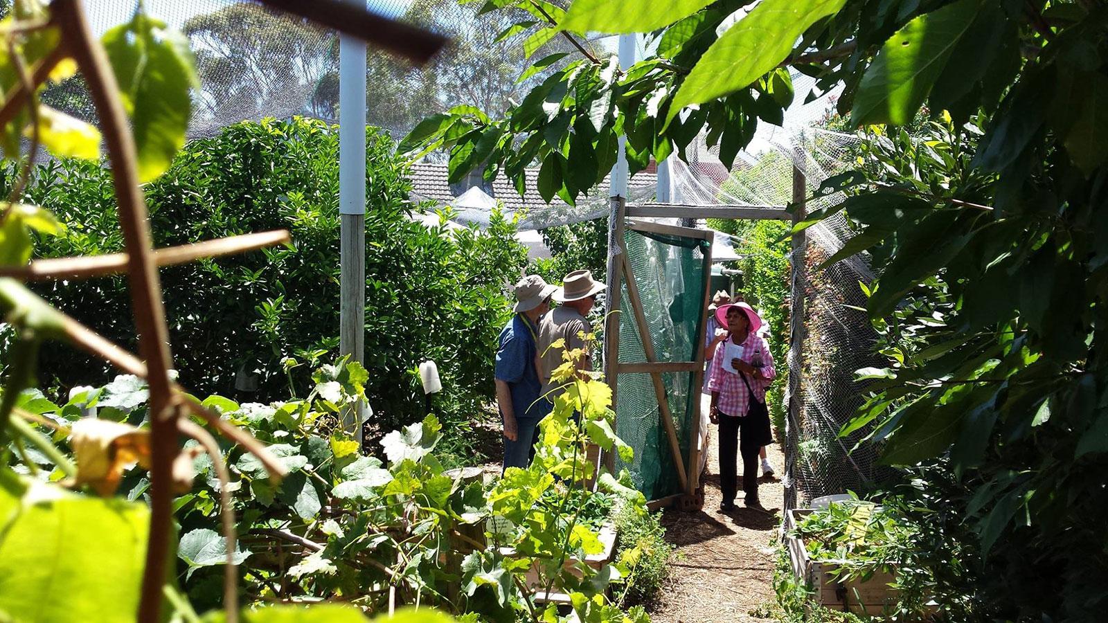 Joes-Connected-Garden---Elizabeth-Grove