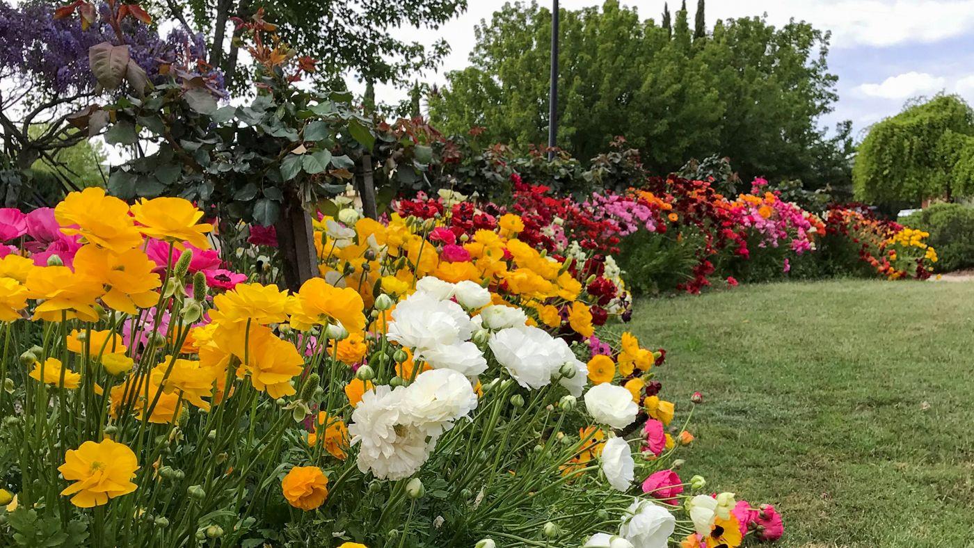 Denise_s_Garden_16_x_9_1_2021.jpg