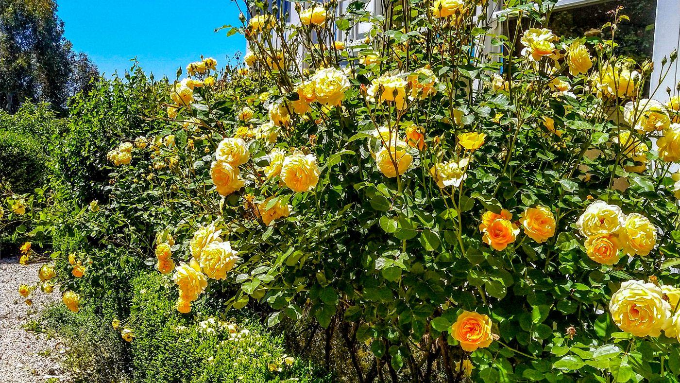 Doole_Garden_16_x_9_4_2921.jpg
