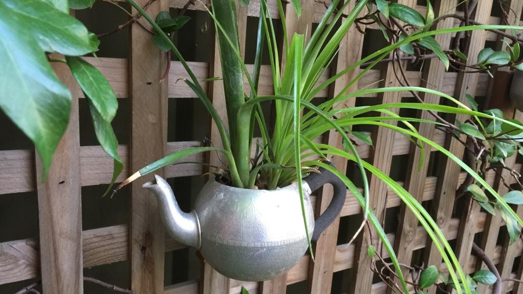 Teapots___Thyme_16_x_9_2.JPG